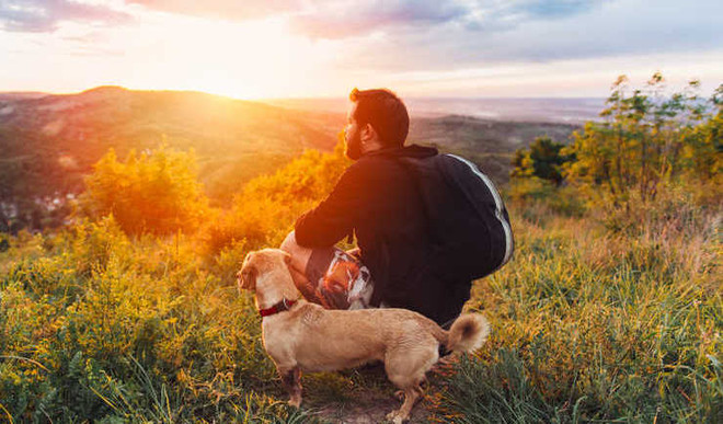 Fostering Reduces Stress In Dogs