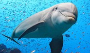 How This Girl Made A Dolphin Laugh