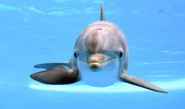 More Than Half Marine Mammals At Risk