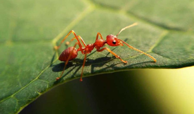 Scientists Are Following Ants For Navigation Ideas