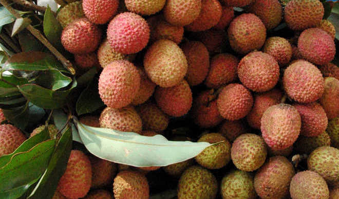 Health Benefits of Luscious Lychees