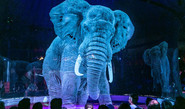 Tech For Animal Cruelty-Free Circus
