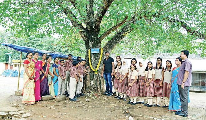 Trees honoured, saplings planted