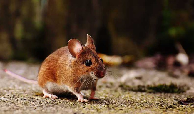 Scientists Remove HIV From Mice