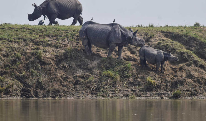Who Is Looking After Animals In Assam Floods?