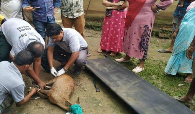 These Men Working 24x7 To Save Animals