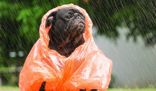 Take Care of Furry Friends In Monsoon