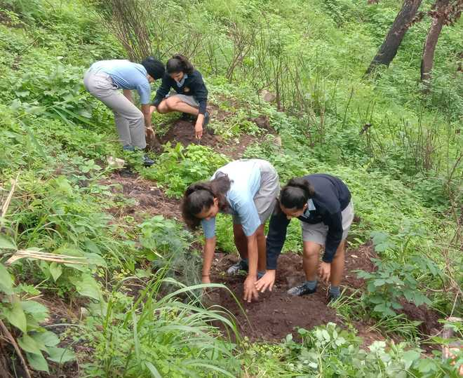 Sanawarians Pledge To Save Water, Plant Trees In Vicinity