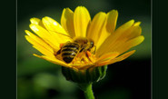 Why Ecosystem Need Bees