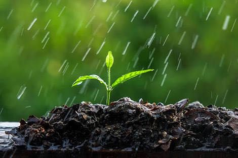 Ayushi's Poem On 'Refreshing Rains'