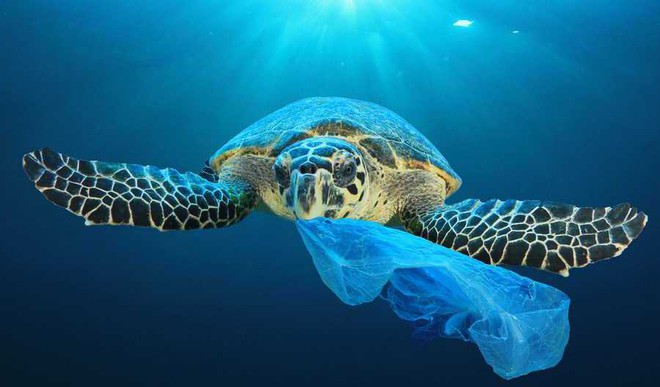 12 Inspiring Stories: How We Can Fight Plastic Pollution