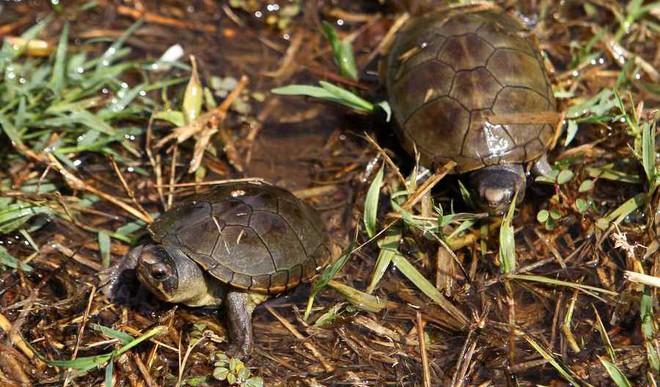 DU Student Spots 2 New Turtle Species