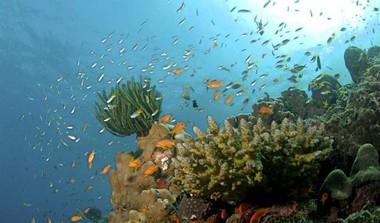 Coral Reefs Make A Comeback In Tamil Nadu