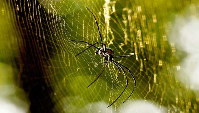 Spider Silk, Wood May Replace Plastic
