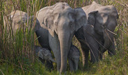 Why Elephants Are Suffering In India