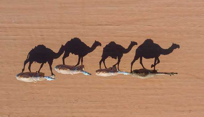 Australia To Shoot 10,000 Wild Camels