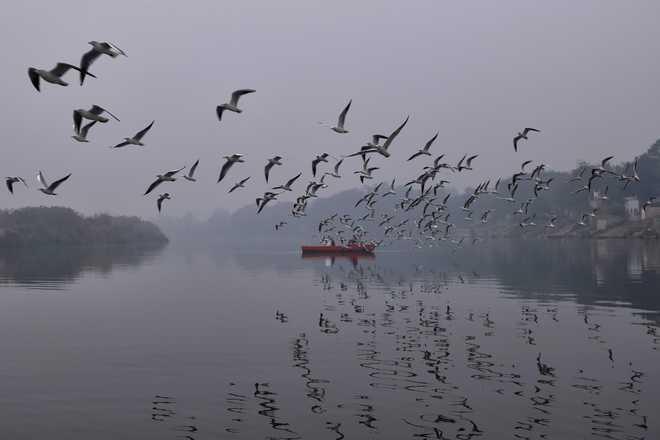 Migratory Birds Flock To Gharana Wetland