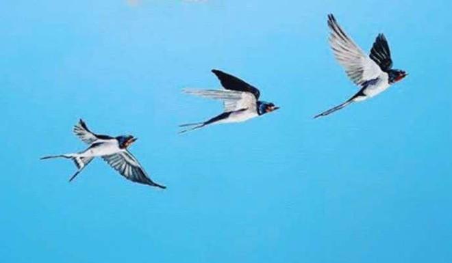 Watch: What Is Live Bird Art?