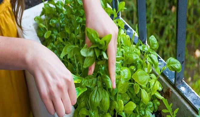5 Cool Indoor Herb Planters