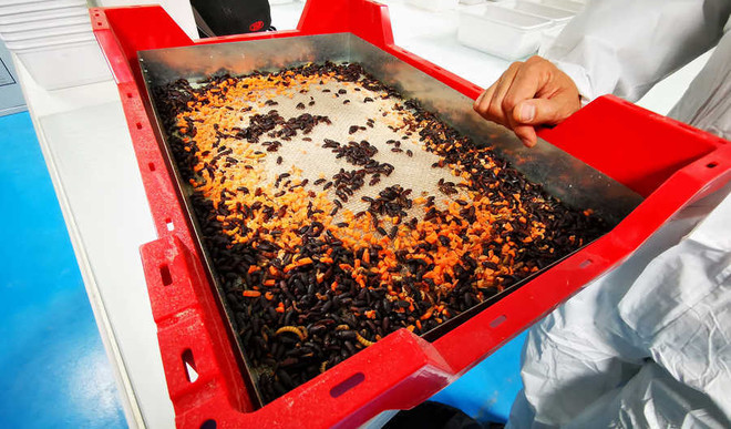 World's Largest Insect Farm Coming Up