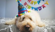 Celebrate Your Pet's Birthday At Home
