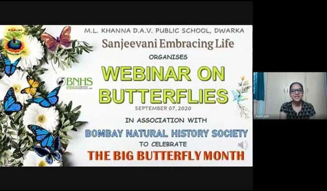 Importance of butterflies for a thriving ecosystem