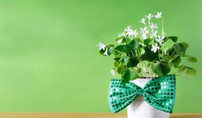 Gift Plants In Festive Season
