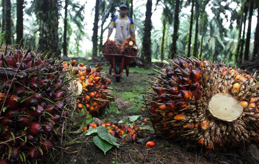 'No Thing As Sustainable Palm Oil'