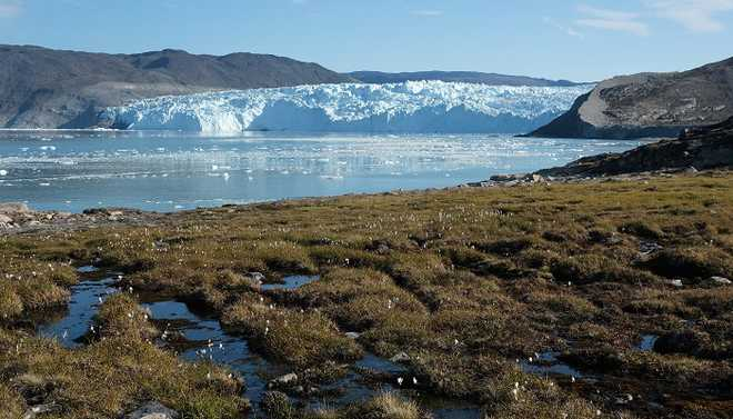 White Artic Is Turning Green. Are We Losing Battle Against Climate Change?