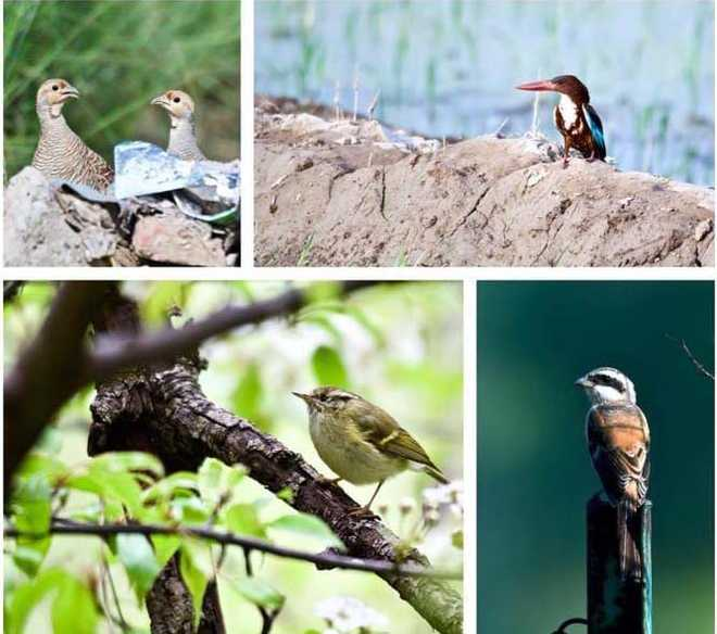 Chandigarh BirdRace