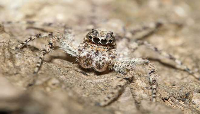 Spiders Are Dying Due To Climate Change