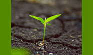 Grow Plants With No Soil, Less Water
