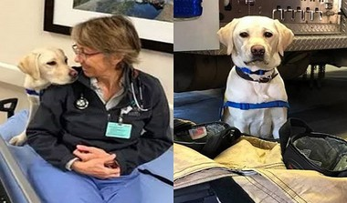 Therapy Dog Helps Medical Professionals