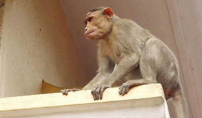 Viral: Monkey's Pool Party In Mumbai