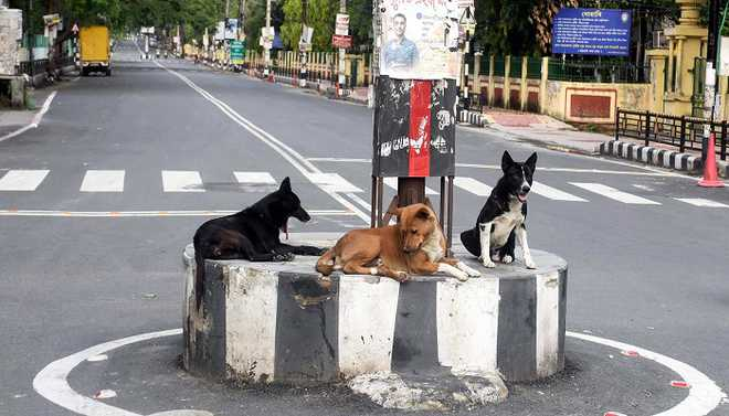 Could Stray Dogs Be The Reason For Covid 19 Spread?