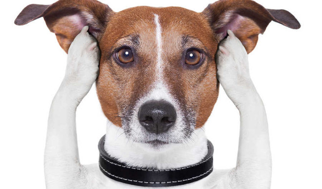 Is Your Pet Under Stress?