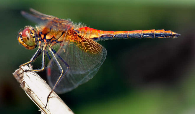 The Dragonflies Are Doing Alright