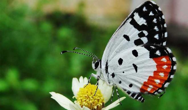 Viral Effect: Butterflies Everywhere