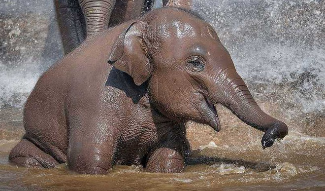 Viral: Baby Elephant's Water Shower