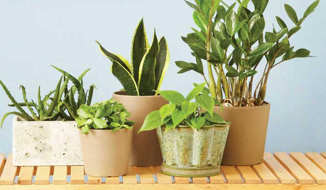 Keep House Plants Pest Free