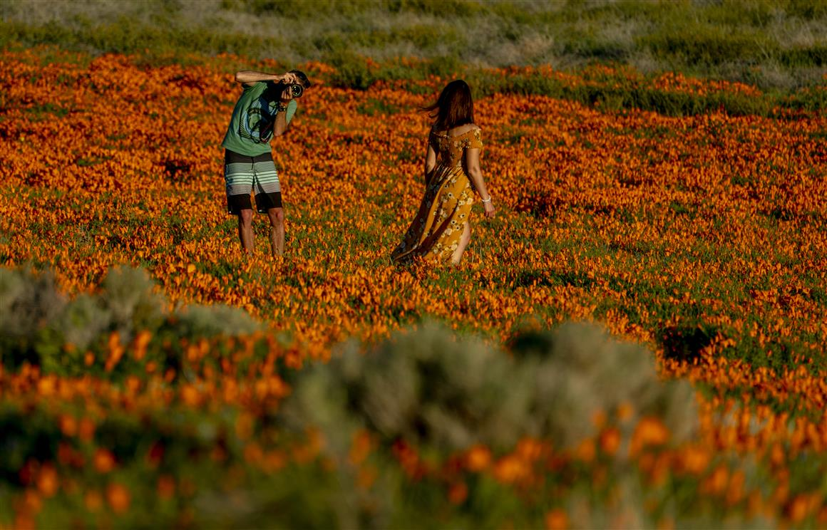 California Poppy Bloom Visible From Space: NASA