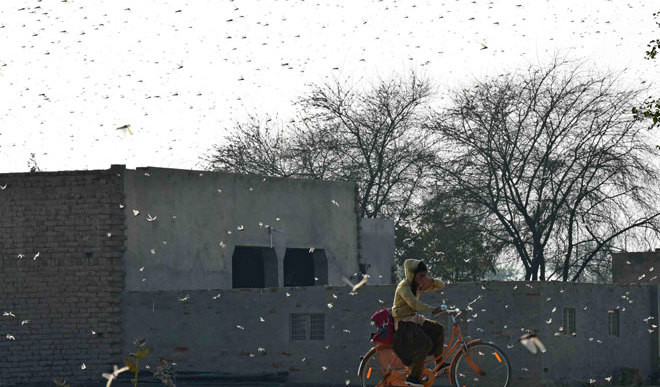 What Is The Locust Attack?