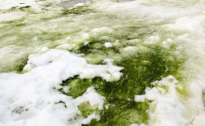Green Snow in Antarctica. Why?
