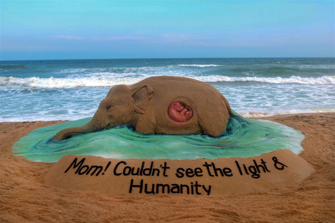 World Seeks Justice For Kerala's Elephant