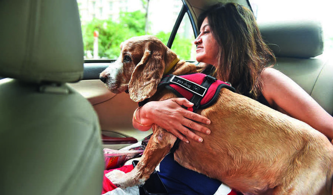 Take Care Of Pets In Summer