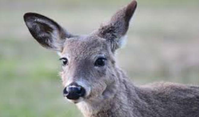 Viral: Heroic Rescue of Swamp Deer