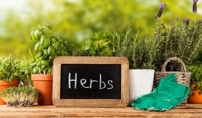 5 Herbs For Your Kitchen Garden