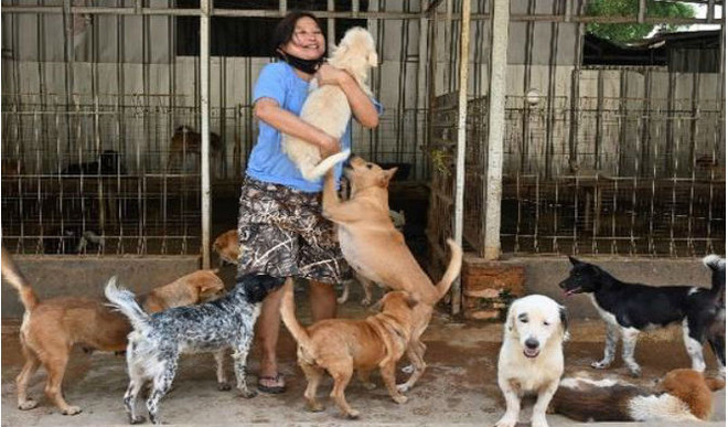 Woman Who Rescued Over 1,000 Dogs