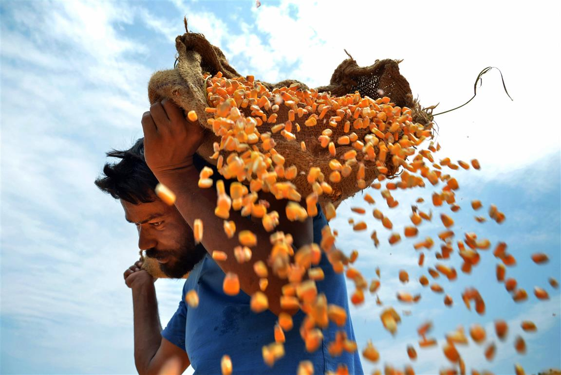 Know The Maize: The Monsoon Food