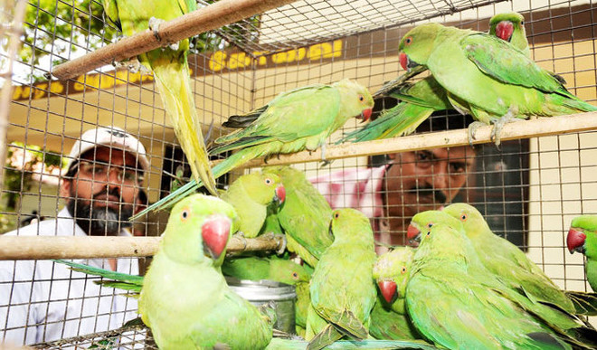 Aishaani: Do Birds Deserve To be Caged?